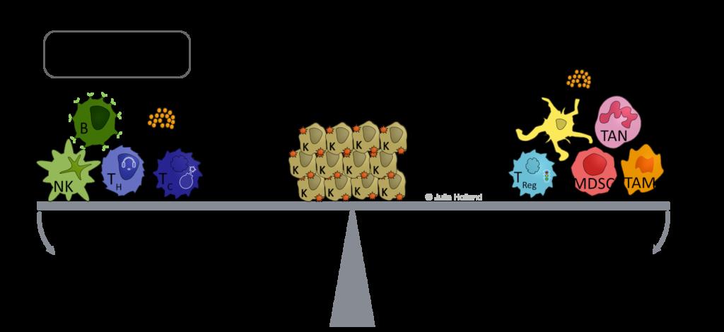 Das Immunsystem kann zum einen den Tumor-Wachstum bekämpfen, aber ihn auch begünstigen. Jenachdem welche Faktoren wirken, begünstigen Immun-Zellen die Eliminierung von Tumor-Zellen, oder begünstigen das ungehemmte Wachstum eines Tumors. Dargestelllt ist hier die Gleichgewichtssituation zwischen Tumor-Schrumpfen und Tumor-Wachstum.