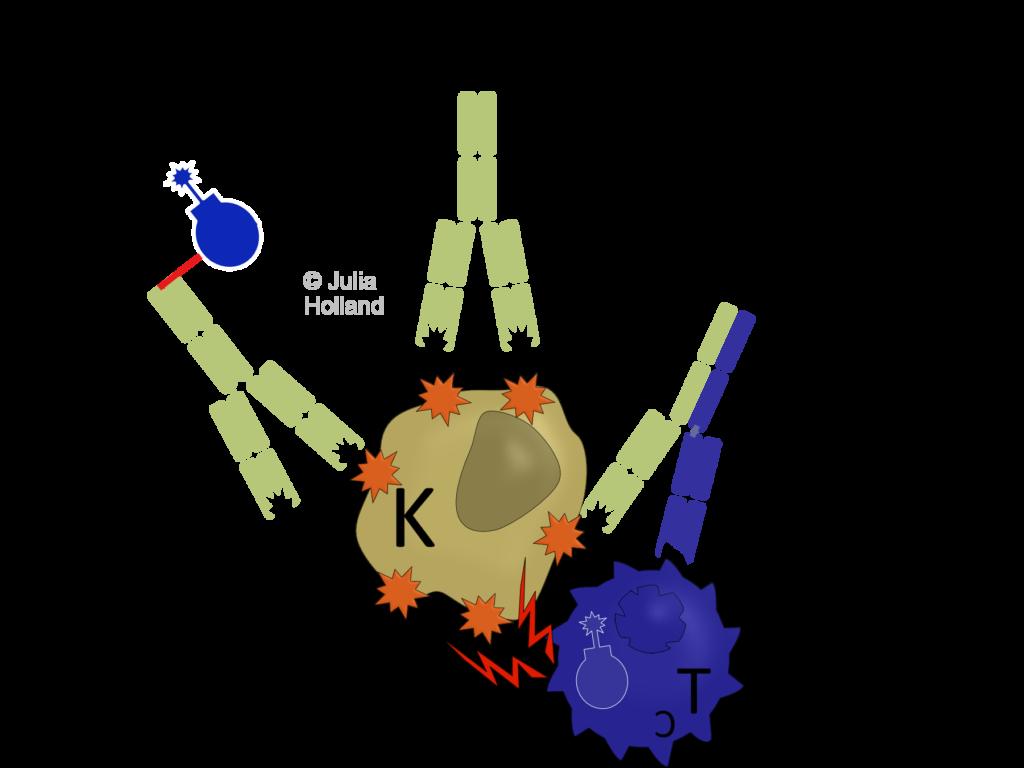 Drei verschiedene Antikörperformate werden dargestellt. Konjugierte Antikörper (ADC), monoklonale Antikörper (mAb) und bispezifische Antikörper (bsAbs).