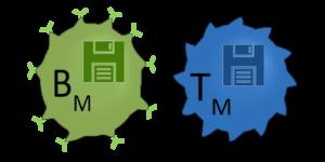 B- und T-Gedaechtnis-Zellen sind dargestellt (BM [grüne Zelle]; TM [blaue Zelle]). Disketten Symbole in den Zellen symbolisieren die Langzeit Speicher (Memory) der Zellen.
