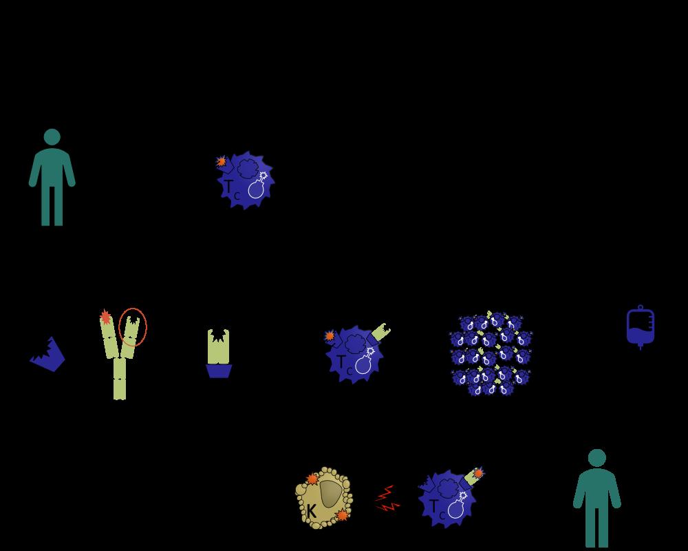 Chimäre-Antigen-Rezeptor-T-Zell Erstellung;