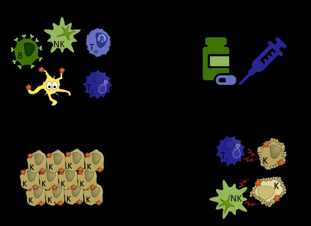 Immuntherapien befähigen das Immunsystem Krebszellen wieder zu erkennen und zu bekämpfen. Somit wird eine Immunantwort gegen Krebs durch Krebsimmuntherapien verstärkt.